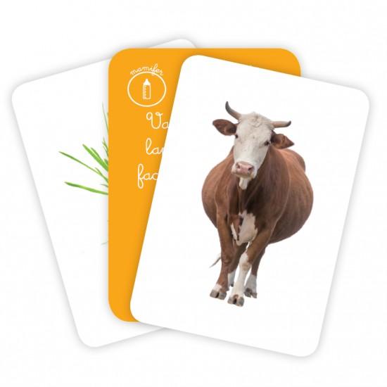 Carti de joc Montessori - Animale. Hrană și adăpost