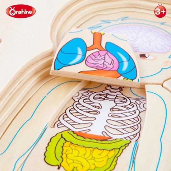 Partile Corpului Uman Puzzle anatomie baietel multistrat din lemn