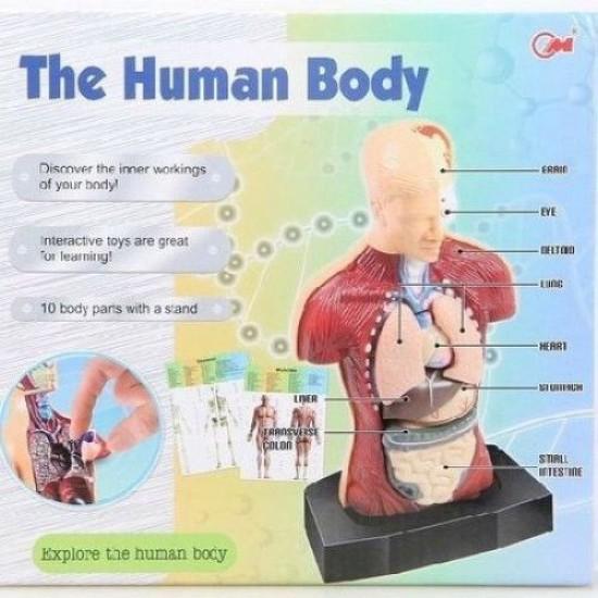 Corpul uman- Joc educativ