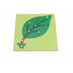 Puzzle educativ Botanic Componentele Frunzei