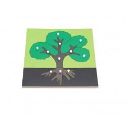 Puzzle educativ Botanic Componentele Unui Copac