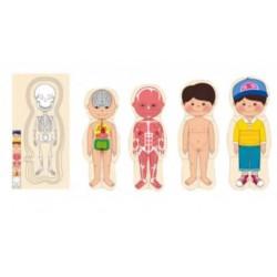 Puzzle educativ multistrat anatomia Baietel