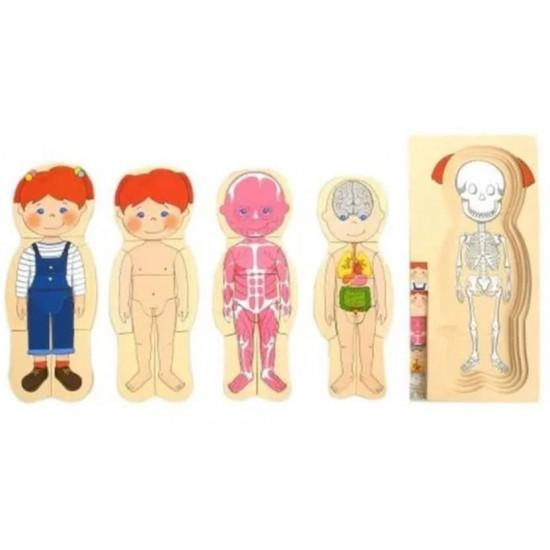 Puzzle educativ multistrat anatomia Fetita